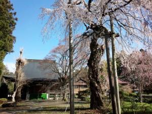 2016正念寺 (6)